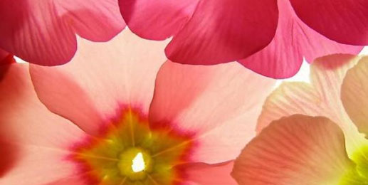 Blumen leinwand bilder blumen wandbilder blumen bilder - Gemalte wandbilder ...