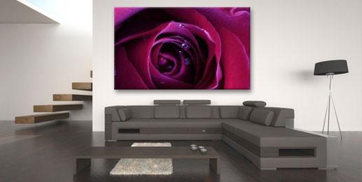 Leinwandbilder Rosen Wandbilder Rosen