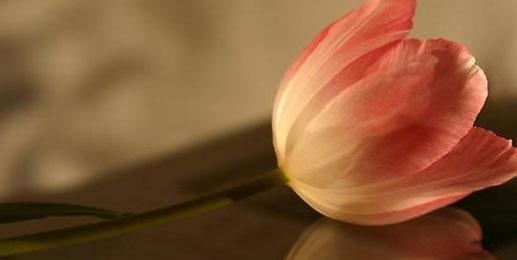 Leinwandbilder Tulpen Wandbilder Tulpen