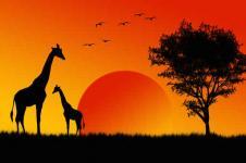 Afrika leinwand bilder afrika wandbilder afrikanische - Mediterrane wandbilder ...