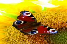 Leinwandbilder Blumen Wandbilder  Schmetterling auf einer Blüte