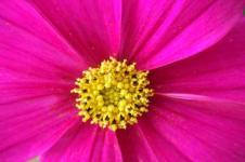 Leinwandbilder Blumen Wandbilder  Blume Blüte Pink