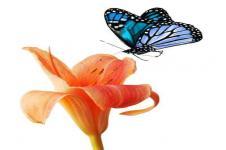 Leinwandbilder Blumen Wandbilder  Orchidee mit einem Schmetterling
