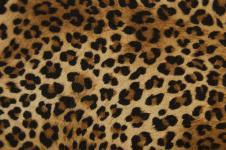 Leinwandbilder Tierwelt in Afrika Wandbilder  Schöne Musterung des Leoparden Afrika Bilder