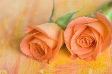 Wandbilder Blumen Wandbilder  Zwei hübsche Rosen in Orange