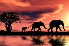 Wandbilder Tierwelt in Afrika Wandbilder  Afrikanische Elefantenherde