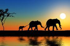 Leinwandbilder Tierwelt in Afrika Wandbilder  Elefantenherde am Wasserloch in Afrika