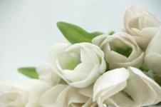 Wandbilder Blumen Wandbilder  Tulpenstrauß mit weißen Tulpen
