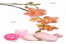 Leinwandbilder Blumen Wandbilder  Orchideen und Steine als Collage