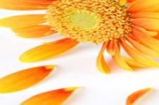 Wandbilder Blumen Wandbilder  Gelbe Blüte Blütenblätter Blumen