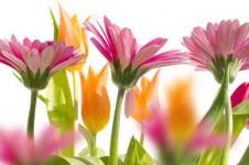 Wandbilder Blumen Wandbilder  Gerbera im Garten
