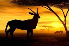Wandbilder Tierwelt in Afrika Wandbilder  Antilope sucht Schutz in der Abenddämmerung in Afrika