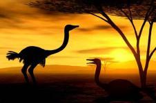Leinwandbilder Tierwelt in Afrika Wandbilder  Kurz vor dem Sonnenuntergang in der Steppe in Afrika
