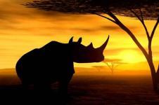 Wandbilder Tierwelt in Afrika Wandbilder  Afrikanisches Nashorn wandert in der Abenddämmerung
