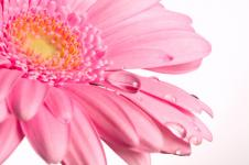 Leinwandbilder Blumen Wandbilder  Wassertropfen auf Blütenblättern