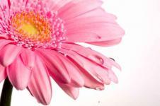Wandbilder Blumen Wandbilder  Blüte mit Tropfen