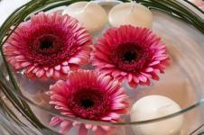 Leinwandbilder Blumen Wandbilder  Gerbera Blüten in Magenta hübsch arrangiert