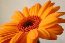 Leinwandbilder Blumen Wandbilder  Blüte in Orange