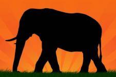 Leinwandbilder Tierwelt in Afrika Wandbilder  Elefant in der Dämmerung in der afrikanischen Savanne
