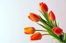 Leinwandbilder Blumen Wandbilder  Orange Tulpen Blüten Blume