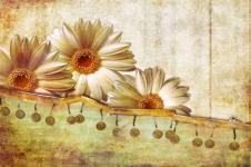 Wandbilder Blumen Wandbilder  Weiße Gerberablüten vor Retrohintergrund