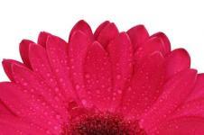 Wandbilder Blumen Wandbilder  Roter Gerberafächer