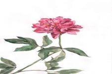 Leinwandbilder Blumen Wandbilder  Blume mit rosa Blüte handgemalt
