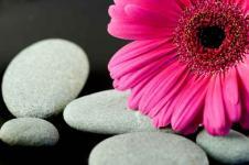 Wandbilder Blumen Wandbilder  Gerberablüte mit Kieseln