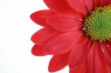 Leinwandbilder Blumen Wandbilder  Rote Blüte