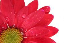 Leinwandbilder Blumen Wandbilder  Blüte mit Tau