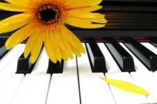 Wandbilder Blumen Wandbilder  Tasten mit gelber Blüte