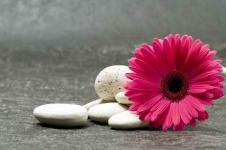 Wandbilder Blumen Wandbilder  Pink Gerbera mit weißen Kieseln