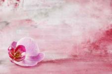 Leinwandbilder Blumen Wandbilder  Malerei und rosa Blüte